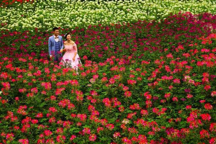 Chongqing-Garden-Expo