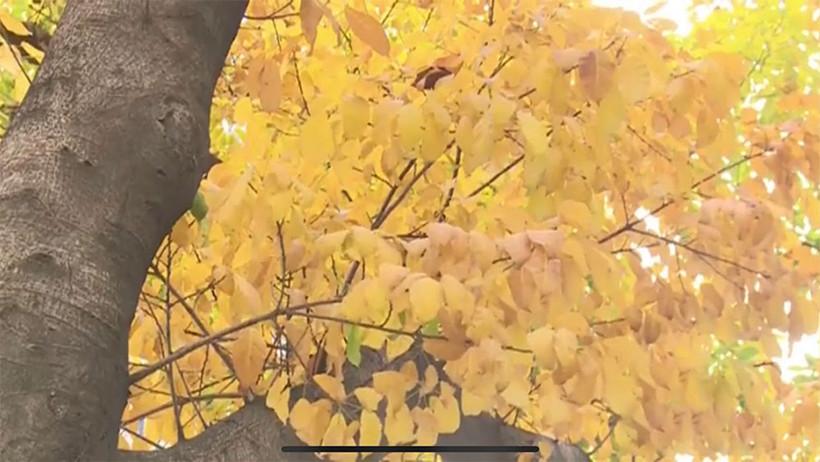 Autumn-Like-golden