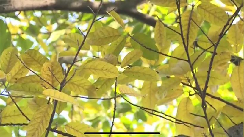 Autumn-Like-leaf