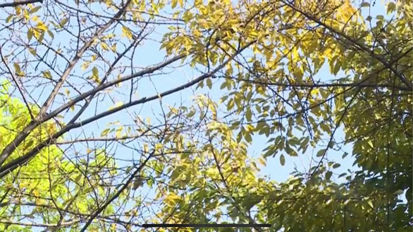 Autumn-Like-tree