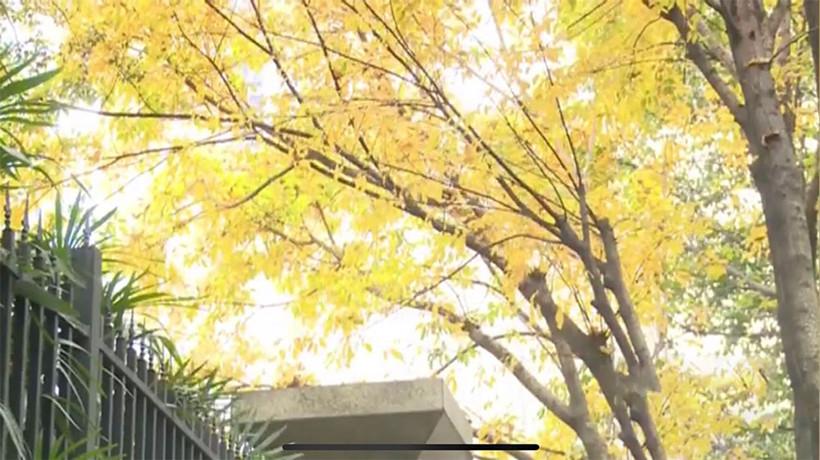 Autumn-Like-yellow