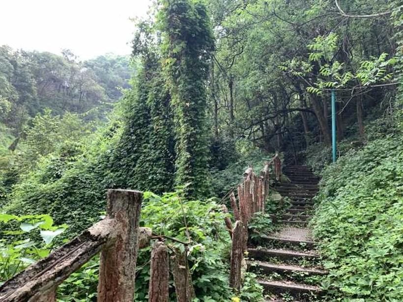 steps-path