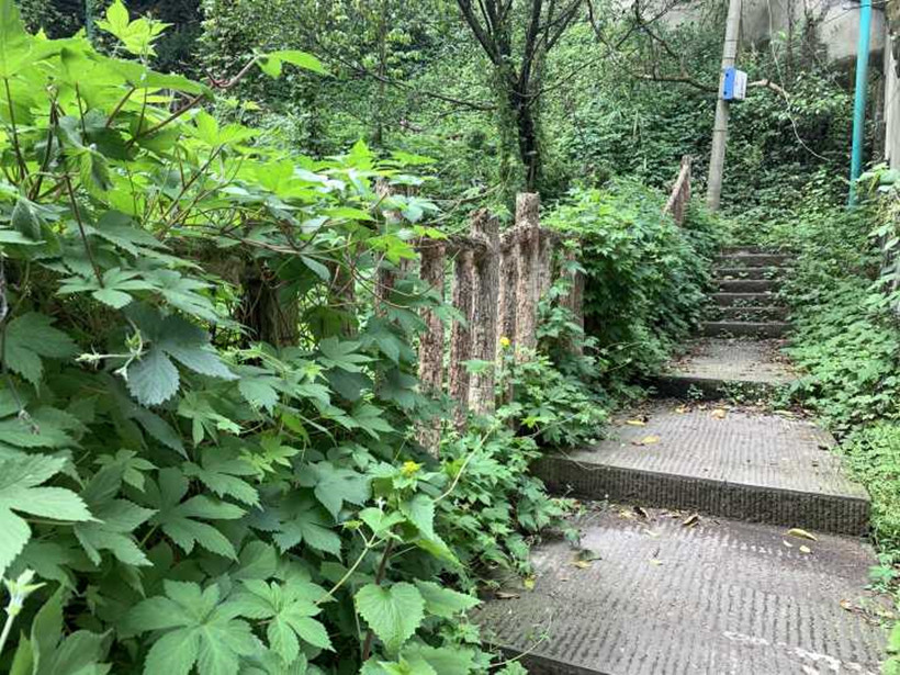 steps-trail