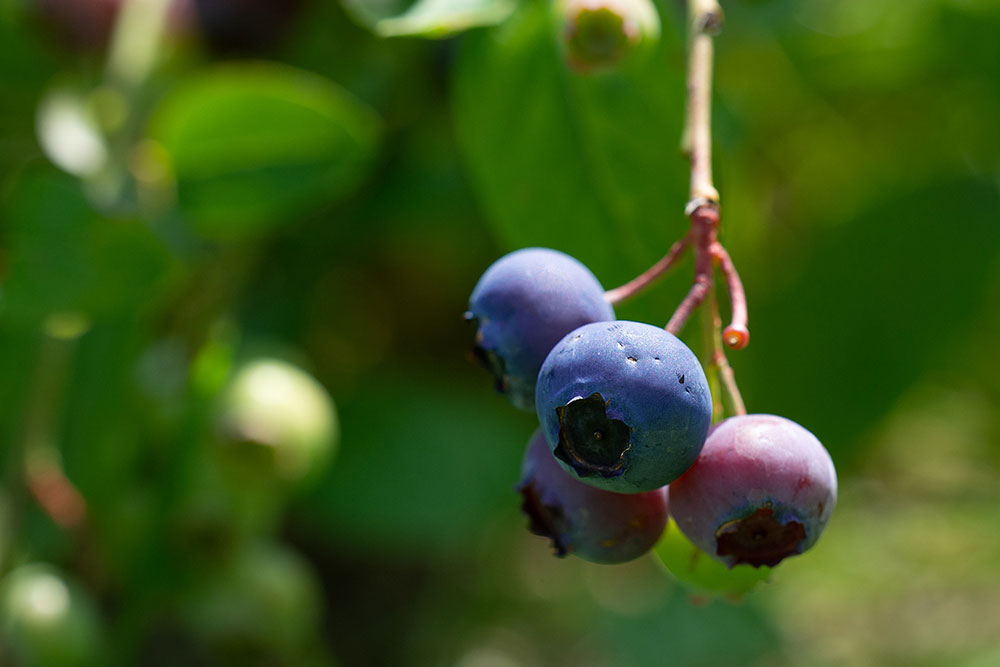 Blueberries-banan