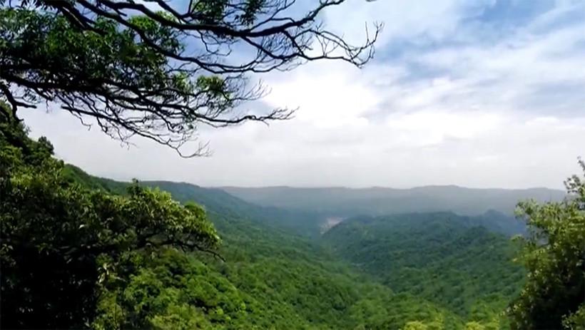 Virgin-Forest