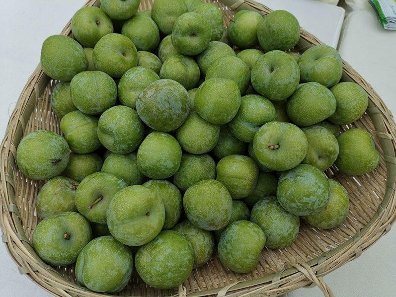 Wushan plum