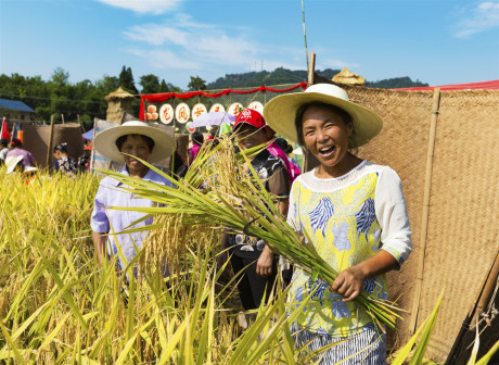 Celebrate Chinese Farmers' Harvest Festival in Chongqing