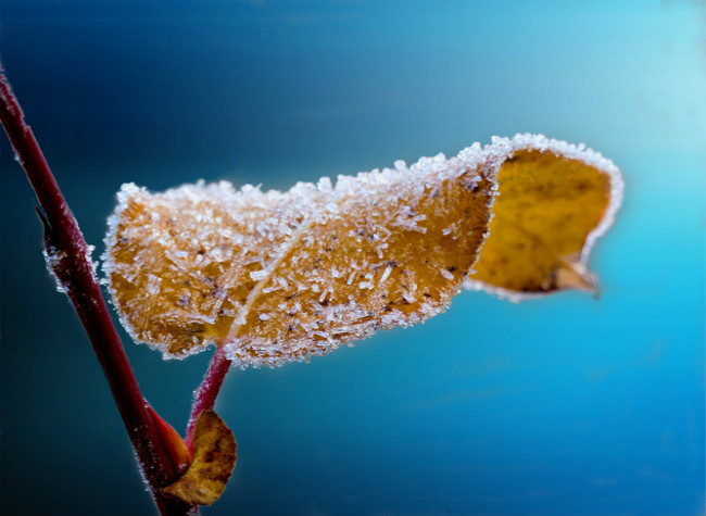 24 Solar Terms: 8 things you need to know about Frost's Descent