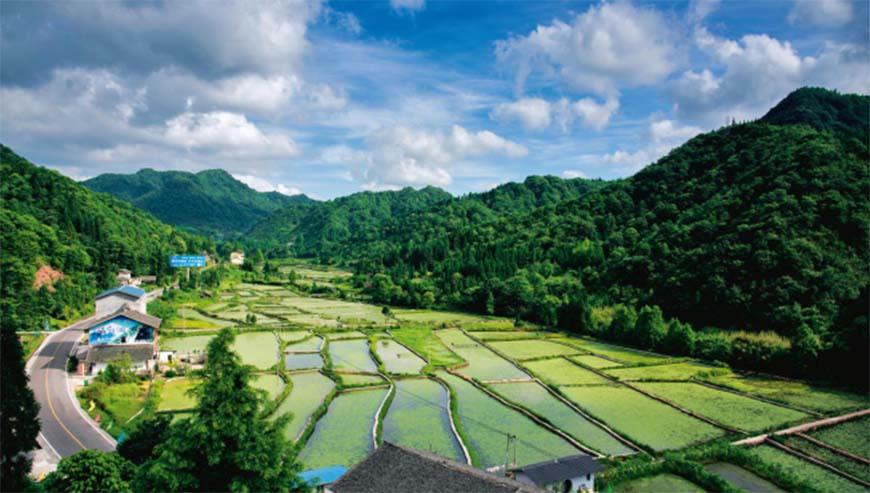 Huangshui vegetable base