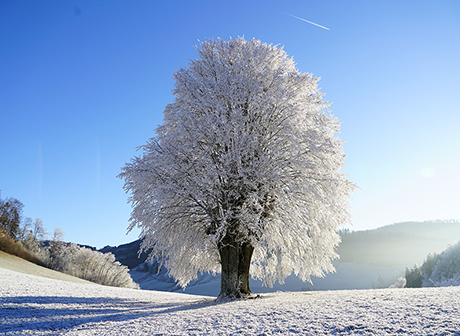 24 Solar Terms: Start of Winter