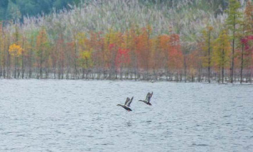 waterbirds at Hanfeng Lake in Kaizhou District