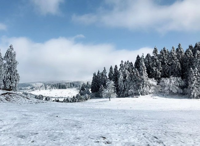 Wulong to Play with White Snow in Winter