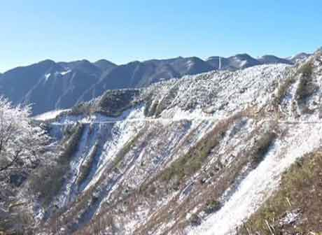 21 Rare Species of Wild Animals Appear on Chongqing Xuebao Mountain