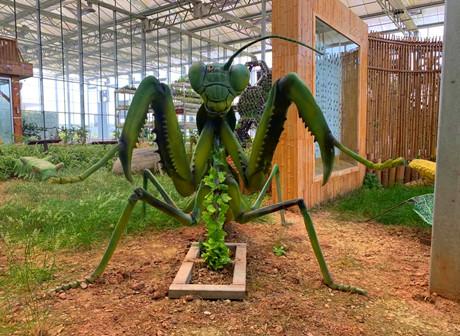 Enjoy the Springtime Warmth with Creepy Crawlies in Bishan Countryside! - James' Vlog