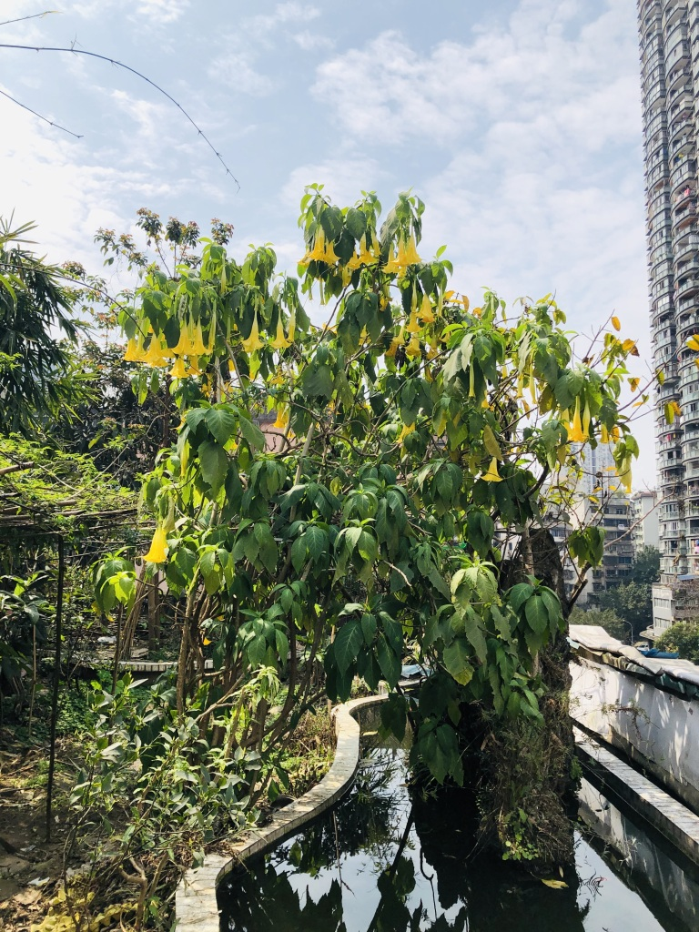 Lovely yellow flowers on Baba's rooftop garden.