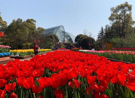 Spring in full bloom at Nanshan Botanical Gardens - James' Vlog