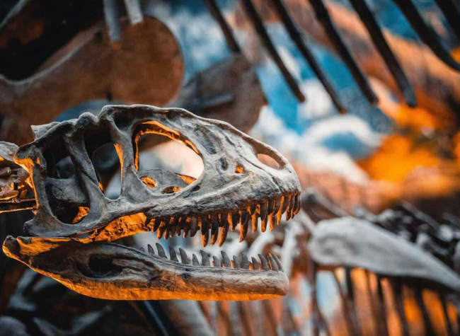 Dinosaurs, Pandas, and the Birth of Life - Chongqing Natural History Museum | Chongqing Travel Guide