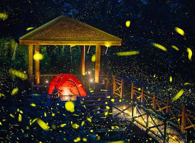 Best Places to do Firefly Sightseeing in Chongqing