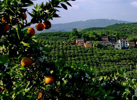 Discover Sweet Taste of Heroic Loyalty in Zhongxian Three Gorges Tourism Belt