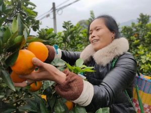 China's Chongqing, Singapore Hold Agricultural Product Trade Online Matchmaking Event