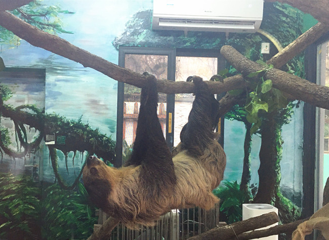 Animals in Chongqing's Zoos Have A coup to Keep out the Cold