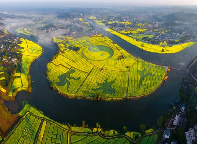 You Can Fly Paragliders to See Rapeseed Flowers in Tongnan This Year