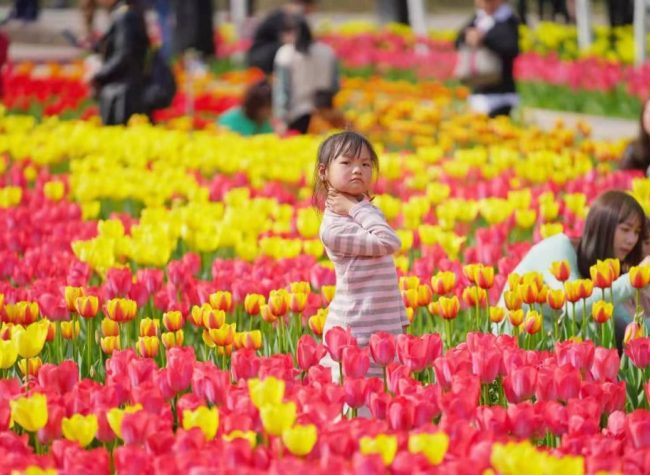 Chongqing Launches Spring Tourism Season with 80 Places to View Flowers