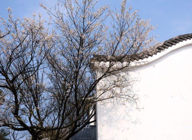 Beautiful Yubei Photo Shooting Tour in Spring