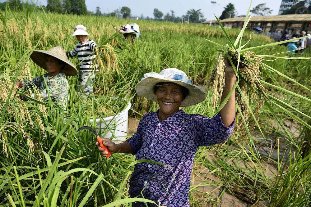 happy-farmer